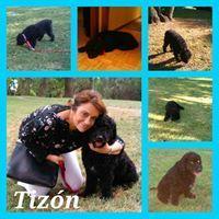 TIZON