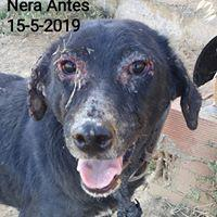NERA. UN ANTES Y UN DESPUÉS! (READ HER STORY, ALSO IN ENGLISH)